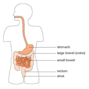 Bowel control problems and anal sex